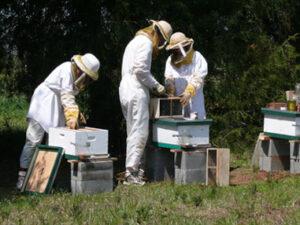 forx farm honey
